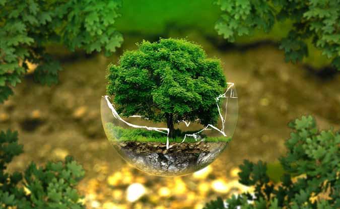 कैसे रखा जाये पृथ्वी के फेफड़े का ख्याल, जब ब्राज़ील में पर्यावरण बजट का हुआ बुरा हाल?