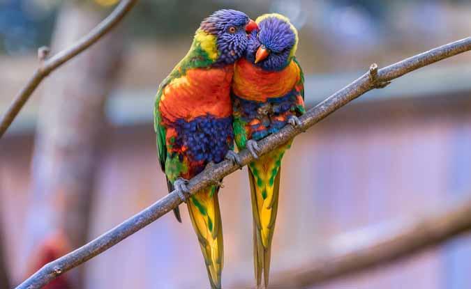 आओ! आज वेलेंटाइन-डे पर प्रकृति प्रेम का इजहार करें